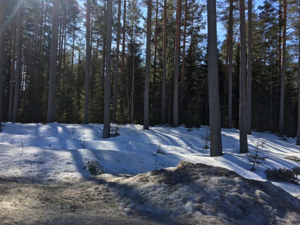 Lyset i de norske træer